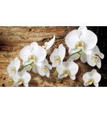 Dutch Wallcoverings Fotobehang Orchidee