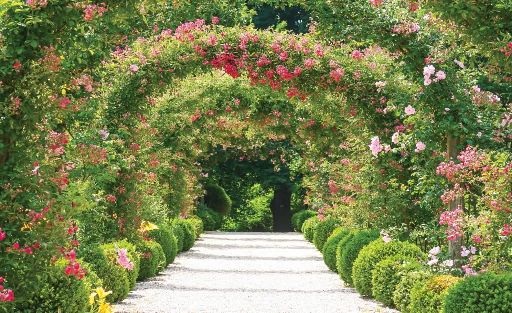 Fotobehang bloementuin de behangwinkelier for Www bloem en tuin nl