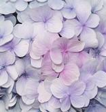 Dutch Wallcoverings Fotobehang Hyacinth lila
