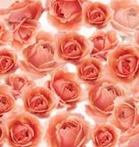 Dutch Wallcoverings Fotobehang Zalm roze rozen