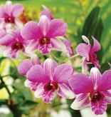 Dutch Wallcoverings Fotobehang Roze orchidee
