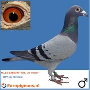 """Arjan Spek NL.15-1388349 """"Grs. De Power"""""""