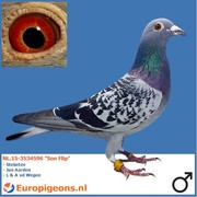 "Ger van Tilburg NL.15-3534596 ""Son Flip"""