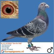 "Paul Groeneveld NL.11-1676045 ""Son De Dijk"""