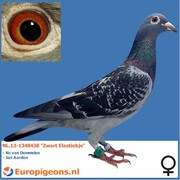 """Ko van Dommelen NL.13-1348438 """"Zwart Elastiekje"""""""