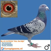 """Jaap Ramsteijn NL.13-1175222 """"Grs. De Dijk"""""""