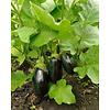 1 Kg Aubergine - mature and fresh from Huelva