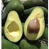 1 Kg Avocado, direkt aus Huelva