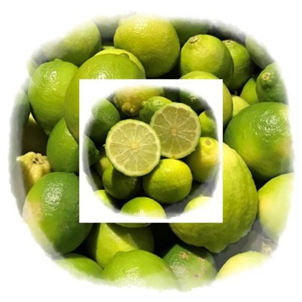 1 Kg fresh limes - directly from the tree