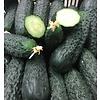 1 Kg frische Grüne Gurken