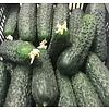 1 Kg fresh cucumbers
