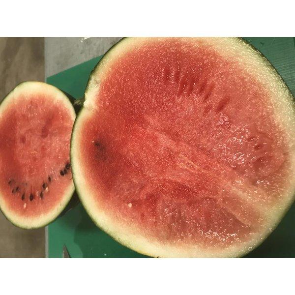 4,5 Kg bis 5,5 Kg Wassermelone Schwarz -- LIMITIERT! FREI HAUS innerhalb Deutschland