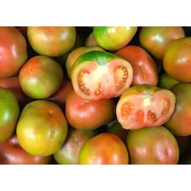 1 Kg frische Tomaten direkt aus meiner Finca
