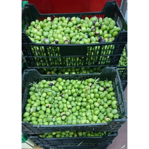 1 Kg olives raw, fresh from Andalusia