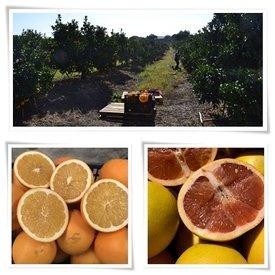 TAGESANGEBOT! 7 Kg Orangen + 3 Kg Grapefruit