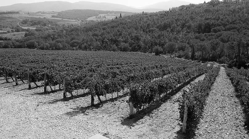 Toscaanse wijnranken met Sangiovese