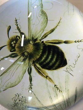 Paperweight bee