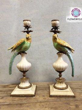 Papegaai kandelaar gekleurd