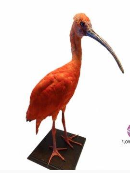 Pot en Vaas Red Ibis