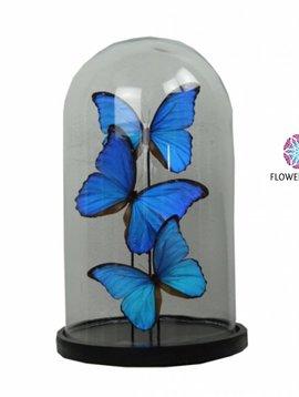 Pot en Vaas Bell jar with blue butterflies