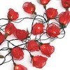 Dreamlights lichtslinger rozen rood