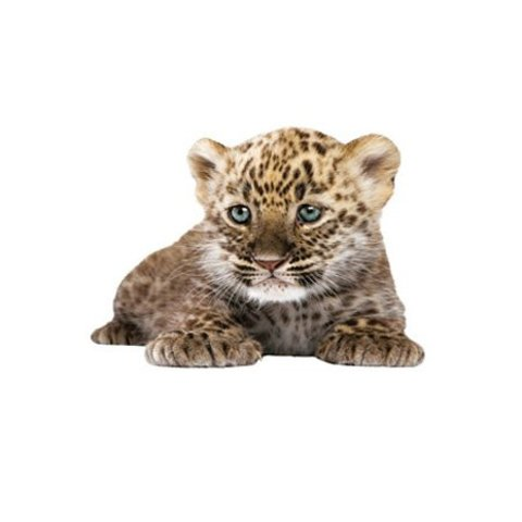 KEK Amsterdam muursticker baby luipaard