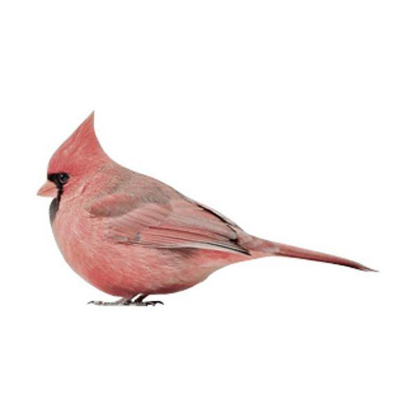 KEK Amsterdam KEK Amsterdam muursticker vogel Cardinal