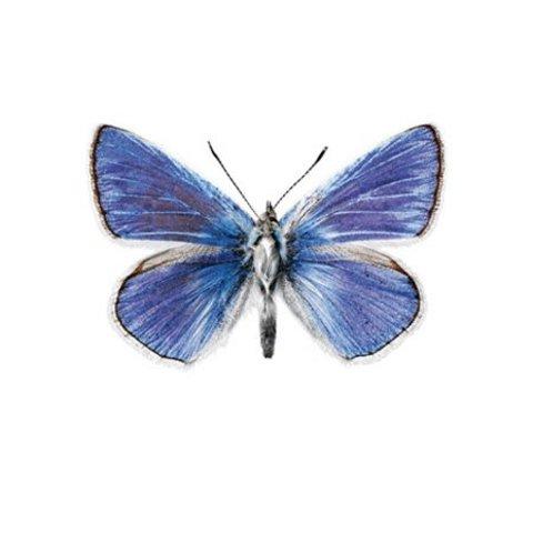 KEK Amsterdam muursticker vlinder blauw