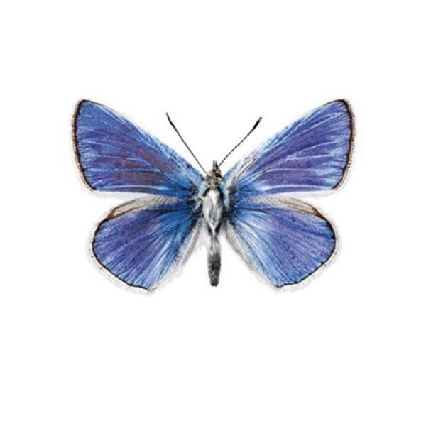 KEK Amsterdam KEK Amsterdam muursticker vlinder blauw