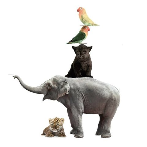 KEK Amsterdam muursticker dieren safari friends set III