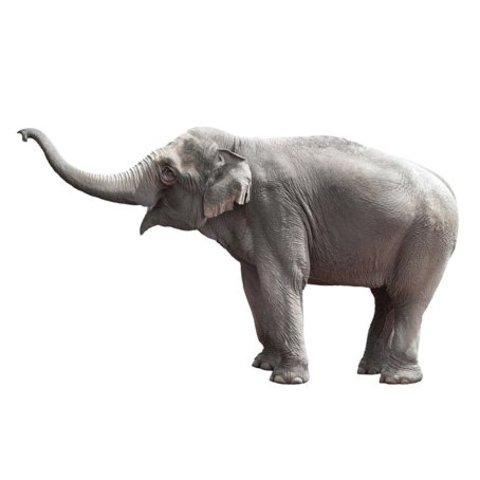 KEK Amsterdam muursticker olifant