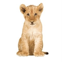 Producten getagd met leeuw