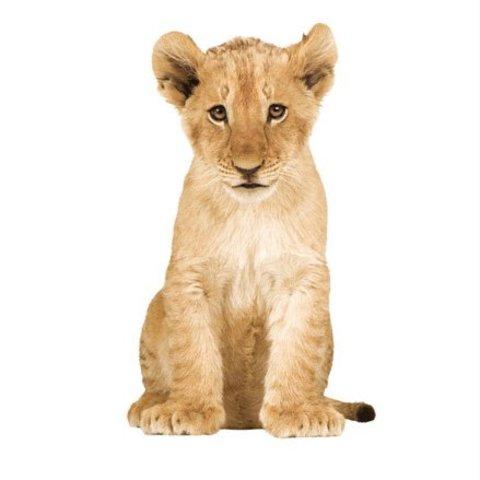 KEK Amsterdam muursticker baby leeuw