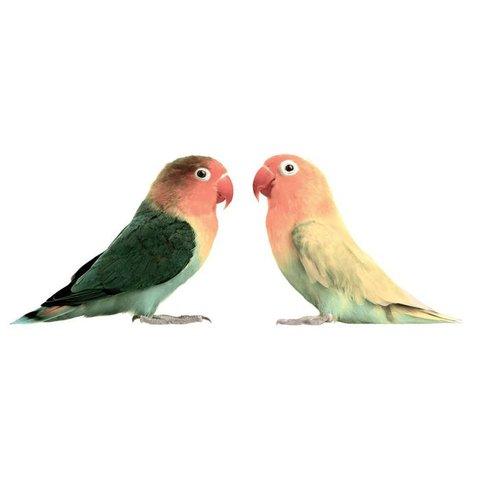 KEK Amsterdam muursticker vogels love birds