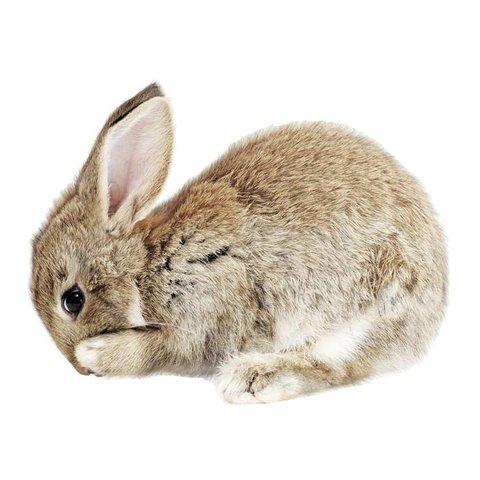 KEK Amsterdam muursticker baby konijn