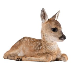 KEK Amsterdam KEK Amsterdam muursticker bambi