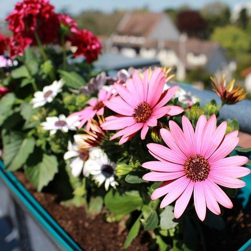 Make your garden or balcony spring proof