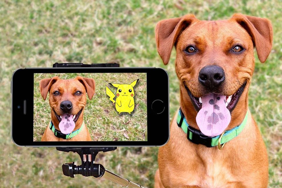 The funniest technology gadgets for dogs