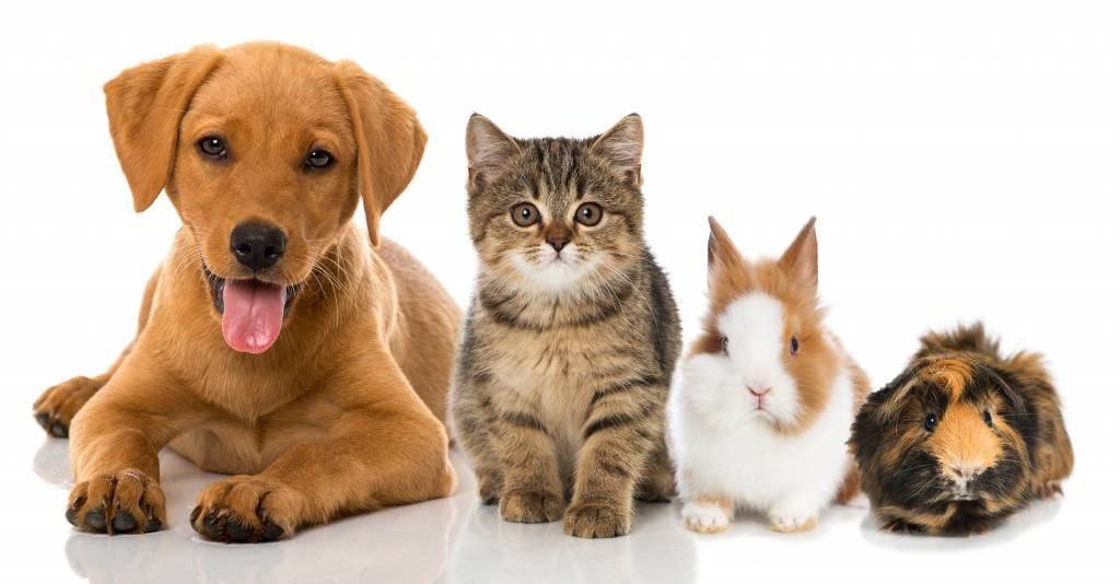 7 good reasons to choose for a pet
