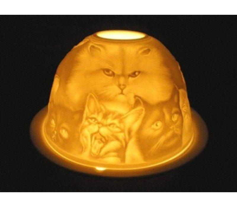 Starlight Katten