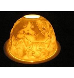 Starlight van Hellmann Versand Starlight Katten