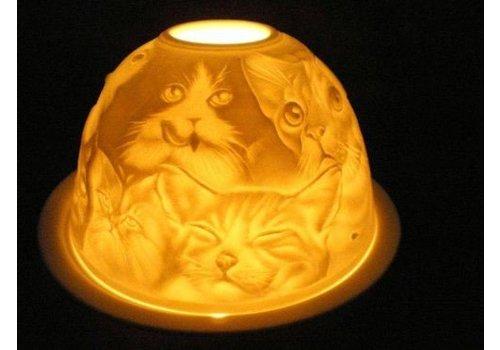 Starlight van Hellmann Versand Starlight Katzen