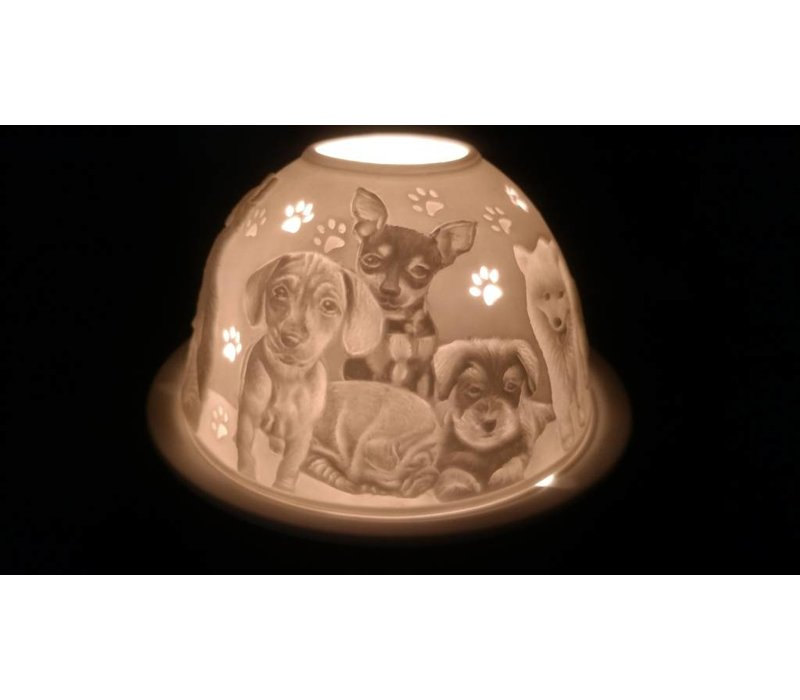Starlight Honden
