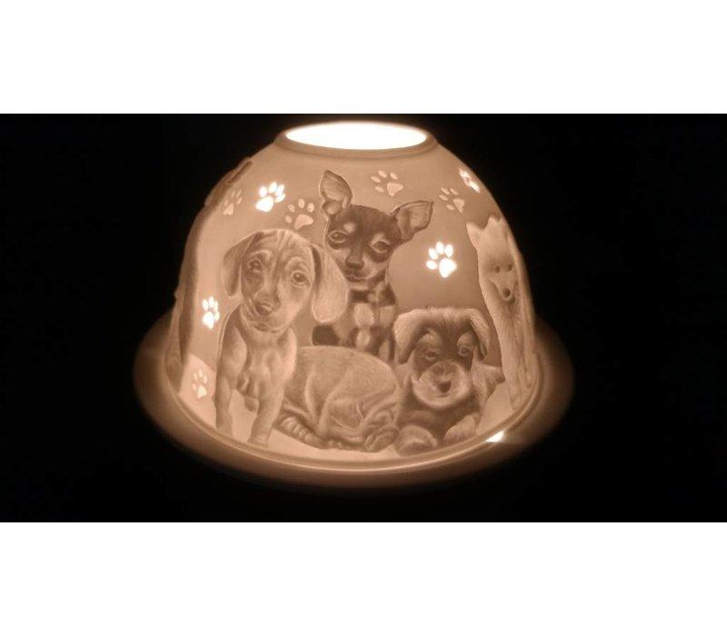 Starlight Hunde