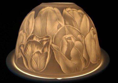 Starlight van Hellmann Versand Starlight Tulp