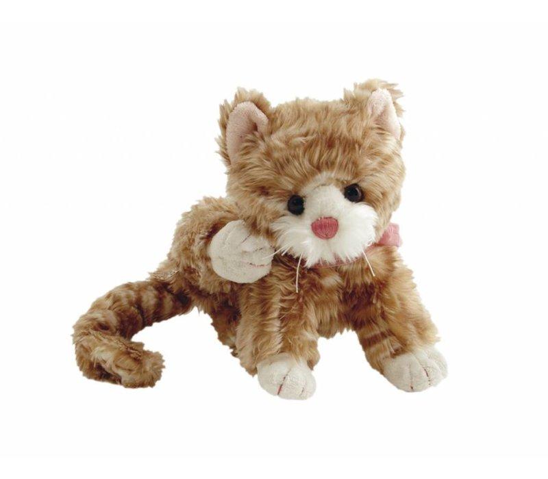 Kleine kat Maciek