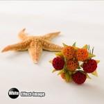 Fotostudio Achtergrond Set van 2 kleuren + Achtergrondstatief