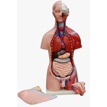 Torso dualsex 45 cm - 23 delig - Anatomie model -