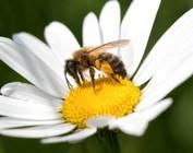 Bijen en Bestuivers
