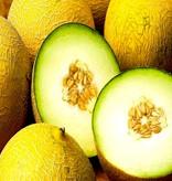 CLASSIC - Honningmelon - Frugtsirup